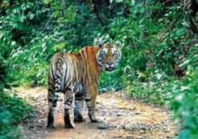 Rajasthan could get its new year gift – Mukundra Tiger Reserve