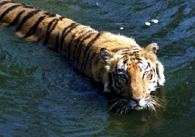 Government declared Mukundra hills sanctuary as third tiger reserve in Rajasthan