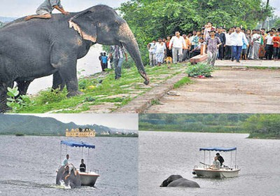 Six tonne Elephant rescued from drowning in a Jaipur lake