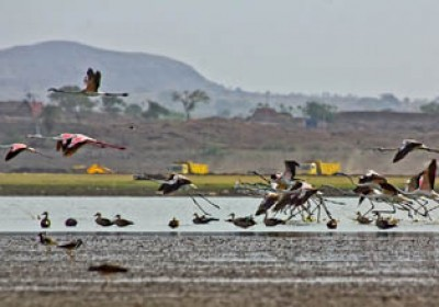 Increase in Flamingo population in Rajasthan