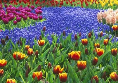 Raj Govt to boost flower cultivation