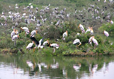 Rajasthan will soon have a first all-birds park in Udaipur