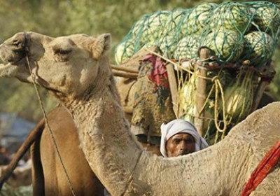 Heatwave conditions prevail in Rajasthan